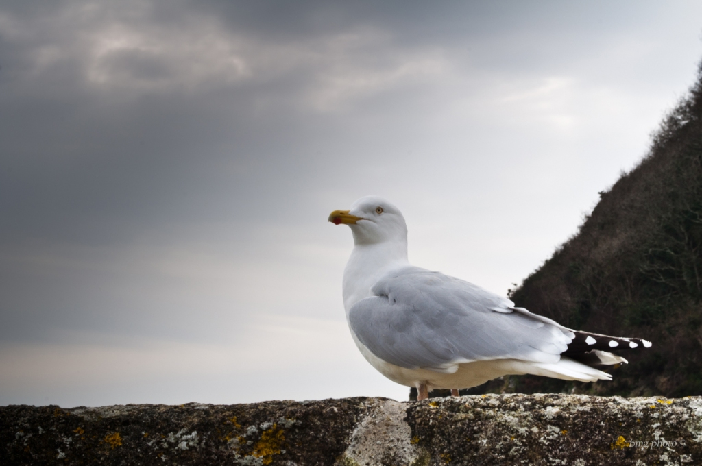 Super Seagull